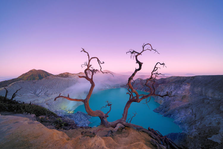 Bare tree on mountain against purple sky