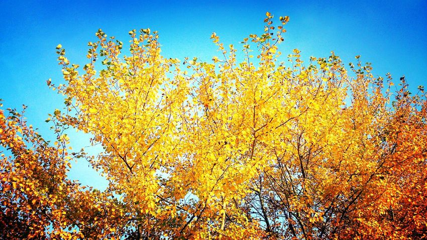 Autumwalk Autumn Autumn Colors Colors Of Autumn Autumn Collection Nature Nature_collection Nature Photography Naturelovers Beautiful Nature FräuleinvonPreußenPhotography Sky Sky_collection Skylovers Trees Tree_collection  Relaxing Enjoying Life EyeEm Nature Lover Taking Photos