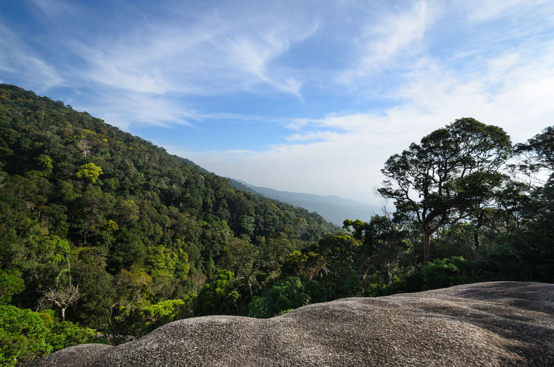 Trekking @Pha Hin Kup ,Chanthaburi Thailand Chanthaburi Pha Hin Kup Thailand Trekking Beauty In Nature Cloud - Sky Day Environment Forest Green Color Growth Land Landscape Mountain Nature No People Non-urban Scene Plant Rock Rock - Object Scenics - Nature Sky Trail Tranquil Scene Tranquility Tree
