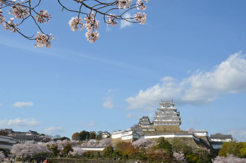 Himeji castle Architecture Beauty In Nature Blue Branch Building Exterior Built Structure Day Flower Growth Himeji Castle Low Angle View Nature No People Outdoors Sky Tree