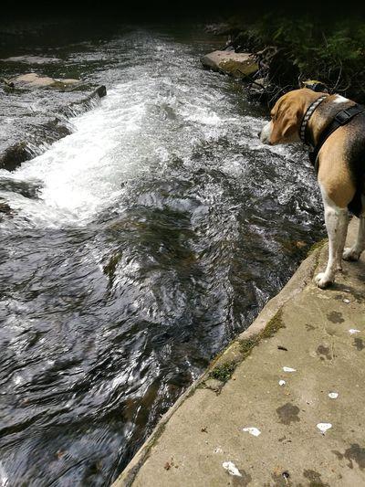 Beagle #river Water
