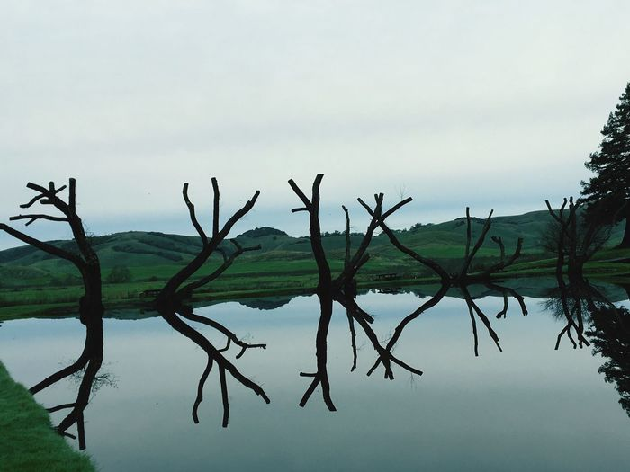 Water Nature Reflection Lake Trees Death Tranquility Outdoors Beauty In Nature Scenics Landscape Silhouette Dancing
