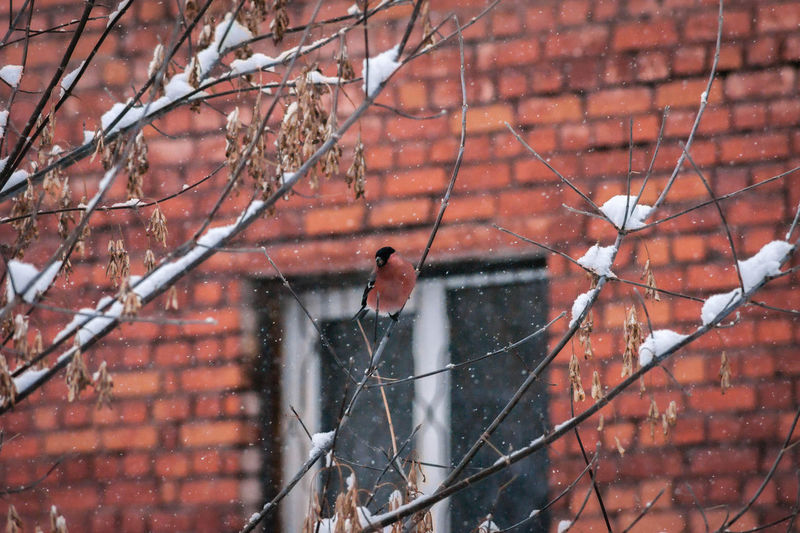 Low angle view of bird on branch in winter
