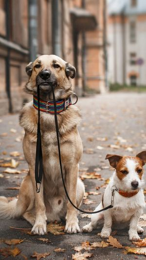 View of two dogs sitting on street