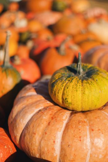 EyeEm Selects Food Food And Drink Freshness Pumpkin Healthy Eating Vegetable Halloween No People Close-up Celebration High Angle View Fruit Focus On Foreground Orange Color Wellbeing Autumn Still Life Squash - Vegetable Gourd Choice