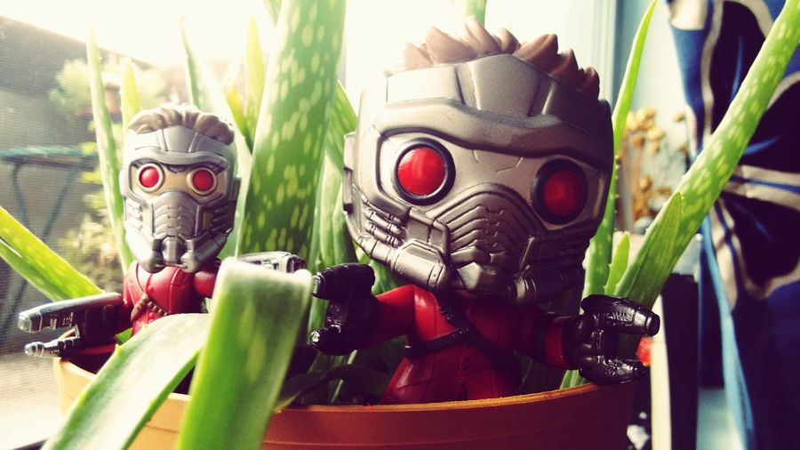 Close-up Large Group Of Objects Green Color Group Of Objects Freshness Colorful Funkofan Vibrant Color Still Life Beauty Sunlight Amazing Funko Pop Vinyl Starlord STARLORD . Chriss Pratt Is Awesome Starlord.Criss Pratt Is Awesome GUARDIANSOFTHEGALAXY Funkopopvinyl Funkopopaddict Front View Red Freshness Green Color Day Beauty In Nature