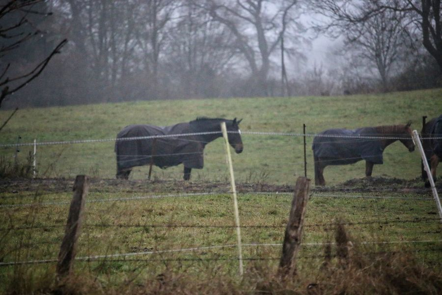 Bleakness Horses Cover November Cold Temperature Fence Grass Field Tranquil Scene Outdoors Mammal Nature Landscape Grazing Grazing Animals Animal Themes No People EyeEm Best Shots - Nature Eyeemphotography Stillleben StillLifePhotography Taking Photos Moment