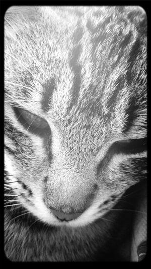 Rosita Tras El Cristal Cats
