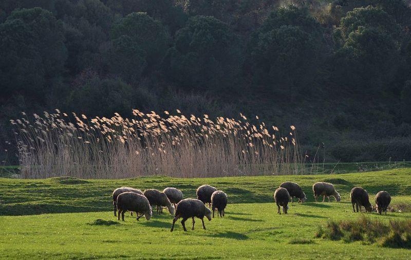Tree Togetherness Grazing Rural Scene Agriculture Grass Landscape Livestock