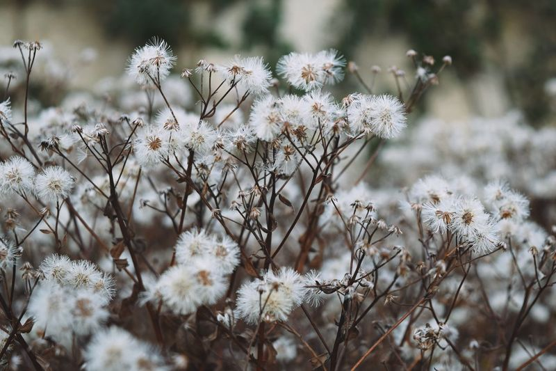 Forest beauty Plant Flowering Plant Flower Growth Beauty In Nature Fragility Nature Vulnerability  Day Freshness Cold Temperature White Color No People Field Close-up Land Focus On Foreground Outdoors