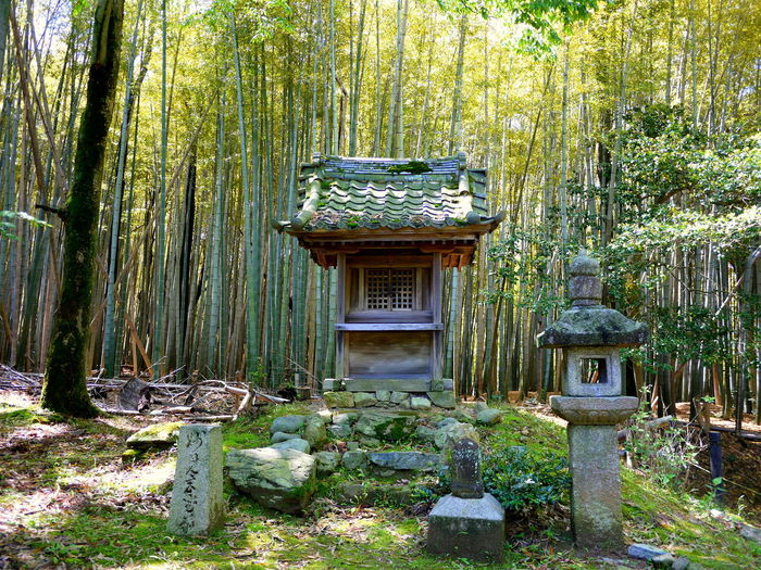 Bamboo Forest Beauty In Nature Forest Green Color Japanese Temple Monochrome No People Small Shrine Stone Lantern Tranquil Scene Tranquility Tree Trunk Trees Wood - Material