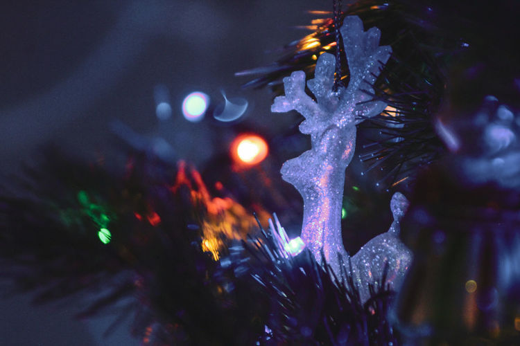 Close-up of illuminated christmas tree during winter