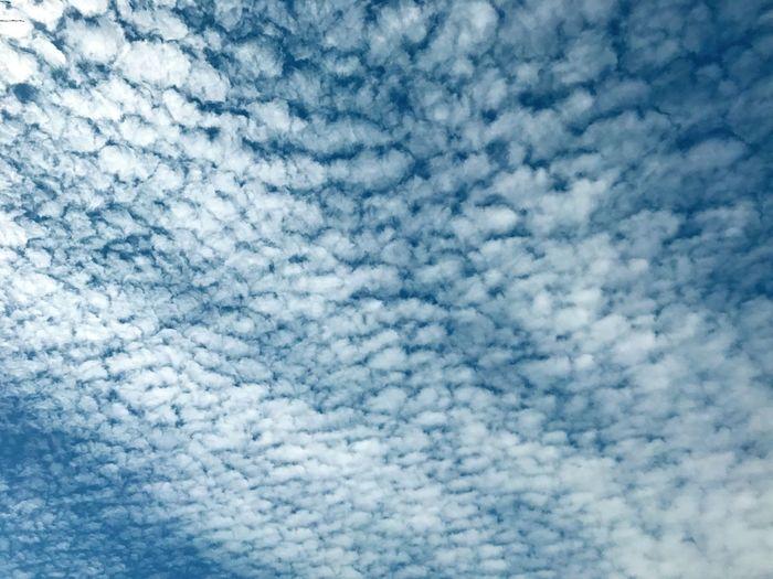 Sky Blue Cielo