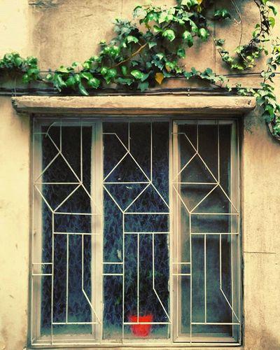 ایران تهران تهران_گردی خیابان_جمهوری پنجره پنجره_فلزی گلدان بهار Iran Iranpics Tehran Tehranpic Jomhuri_street Jomhuristreet Window Closewindow Flower Flowerpot Red_flowerpot
