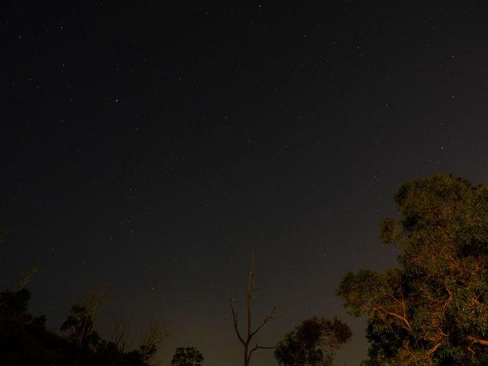 Night Tree Star