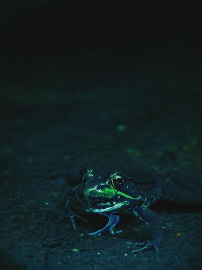 Glowing frog
