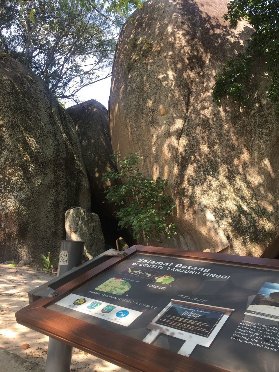 tree, plant, no people, nature, day, solid, rock - object, rock, technology, table, sunlight, art and craft, communication, outdoors, wireless technology, representation, close-up, human representation, tranquility, trunk