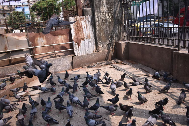 Pigeons perching in a row