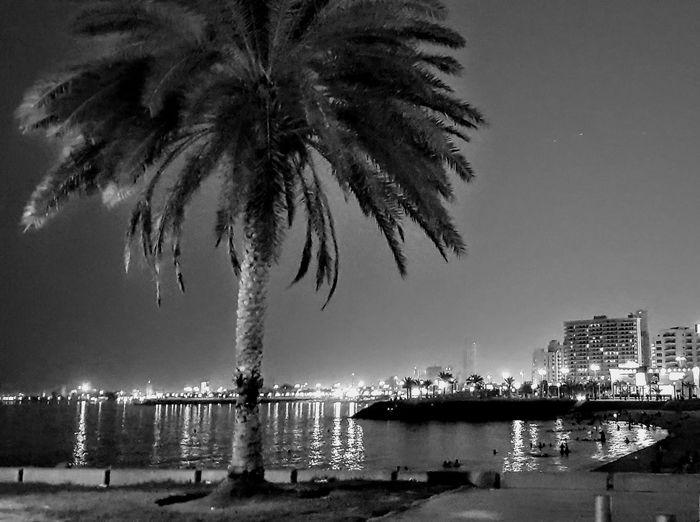 Arabian Gulf, Kuwait Tree City Cityscape Water Illuminated Palm Tree Sky Building Exterior Architecture Boat EyeEmNewHere