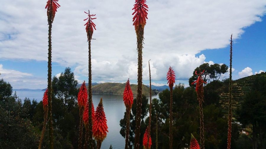 Isla del Sol Inca Lake Titicaca EyeEmNewHere Bolivia Isla Del Sol Flag Patriotism Sky No People Growth Nature Day