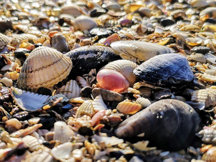 Close-up of shells on beach