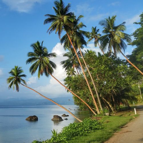 Somewhere between Savusavu town and Cousteau Resort in Fiji Tree Fiji Palm Tree Water Sea Nature Growth No People Outdoors Beauty In Nature Beach Day Tranquility Scenics Sky