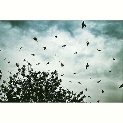 🐦☁🌳 Birds Sky Cloud Photographie  Picoftheday Montage Fautpasdeconner YEAHBUDDY