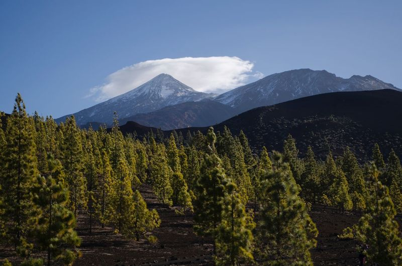 On a different planet EyeEm Nature Lover EyeEmNewHere Hiking Teide National Park Teide Mountain Tranquility Beauty In Nature Nature Scenics Tranquil Scene Mountain Range Outdoors Sky Tree Landscape Day No People Snow