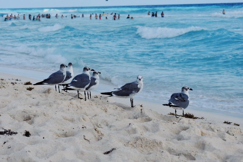 Beach Sand Water Bird Sea Animals In The Wild Nature