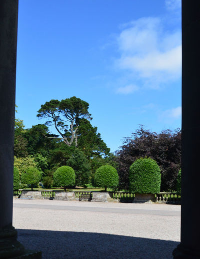 Beauty In Nature Blue Day Green Green Color Growth Lawn Lush Foliage Mount Stewart Mount Stewart Gardens Mount Stewart National Trust Nature No People Northern Ireland Outdoors Park Park - Man Made Space Plant Scenics Sky Tranquil Scene Tranquility Tree Tree Trunk