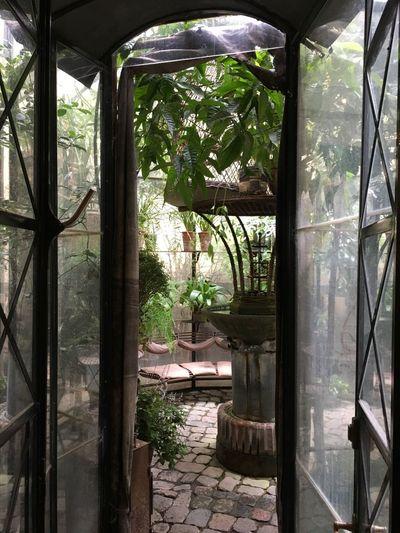 Plants seen through window