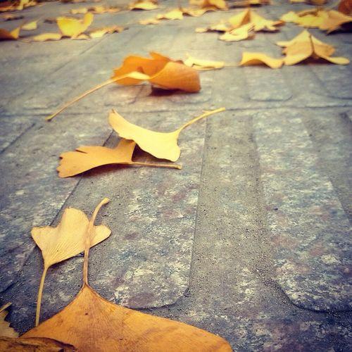 秋杏。 微距