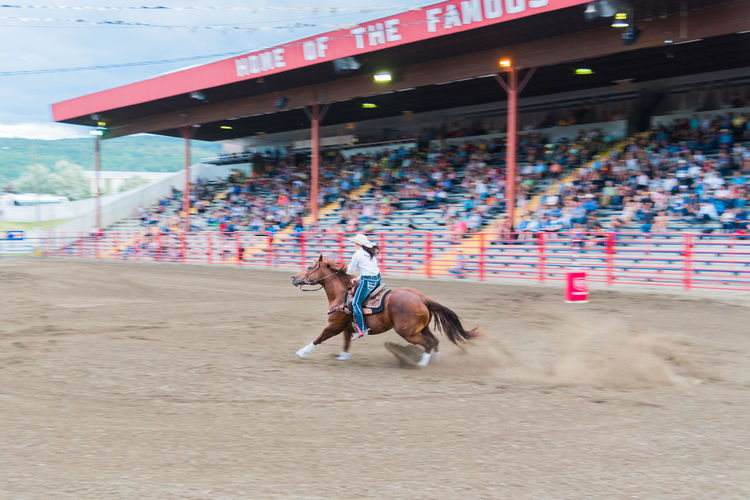 Williams Lake, British Columbia/Canada - June 6, 2016: horse and rider compete in the barrel racing competition at the 90th Williams Lake Stampede, one of the largest stampedes in North America 90th Williams Lake Stampede Arena Horse And Rider Racing Rodeo Travel Woman Audience Barrel Racing Candid Competition Cowgirl Crowd Dangerous Documentary Editorial  Extreme Sports Fast Horse Professional Rodeo Speed Stampede Stampede Grounds Stands Tourism