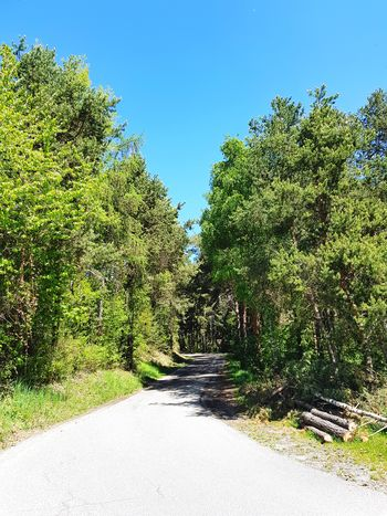 Spring Blue Sky Nature Green Calm Forest Woods Log Rural Road Tree Clear Sky Sunlight Blue Sky Growing Young Plant Stalk Growth Green Color Tranquil Scene Empty Road Countryside Plant Life Stem Visual Creativity EyeEmNewHere