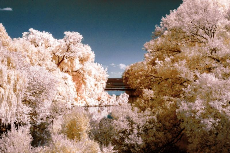 Infrared Image Of Trees By Etobicoke Creek Against Sky