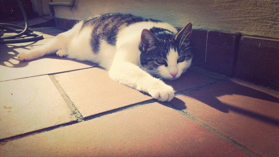 Cat Sina