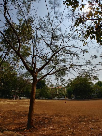 Summer Ground Festival Indian Gudhi Padwa Society Pune Temparature Heat Tree Tree Branch Sky