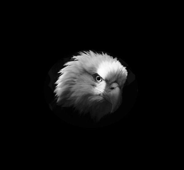 Bald Eagle Bald Eagle Portrait Eagle Animal Themes Animal Wildlife Animals In The Wild Beak Bird Bird Of Prey Black Background Close-up Nature One Animal Studio Shot