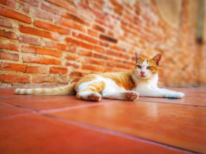 stray cat in