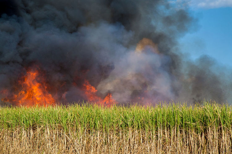 Fired Accidents And Disasters Air Pollution Burning Destruction Environment Environmental Issues Field Fire Fire - Natural Phenomenon Flame Grass Growth Heat - Temperature Land Landscape Nature No People Outdoors Plant Pollution Power In Nature Sign Smoke - Physical Structure Sugar Cane Field Warning Sign