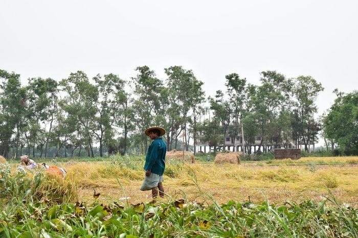 Fields Grass Growth Mayapur Nature People Plantation Tree