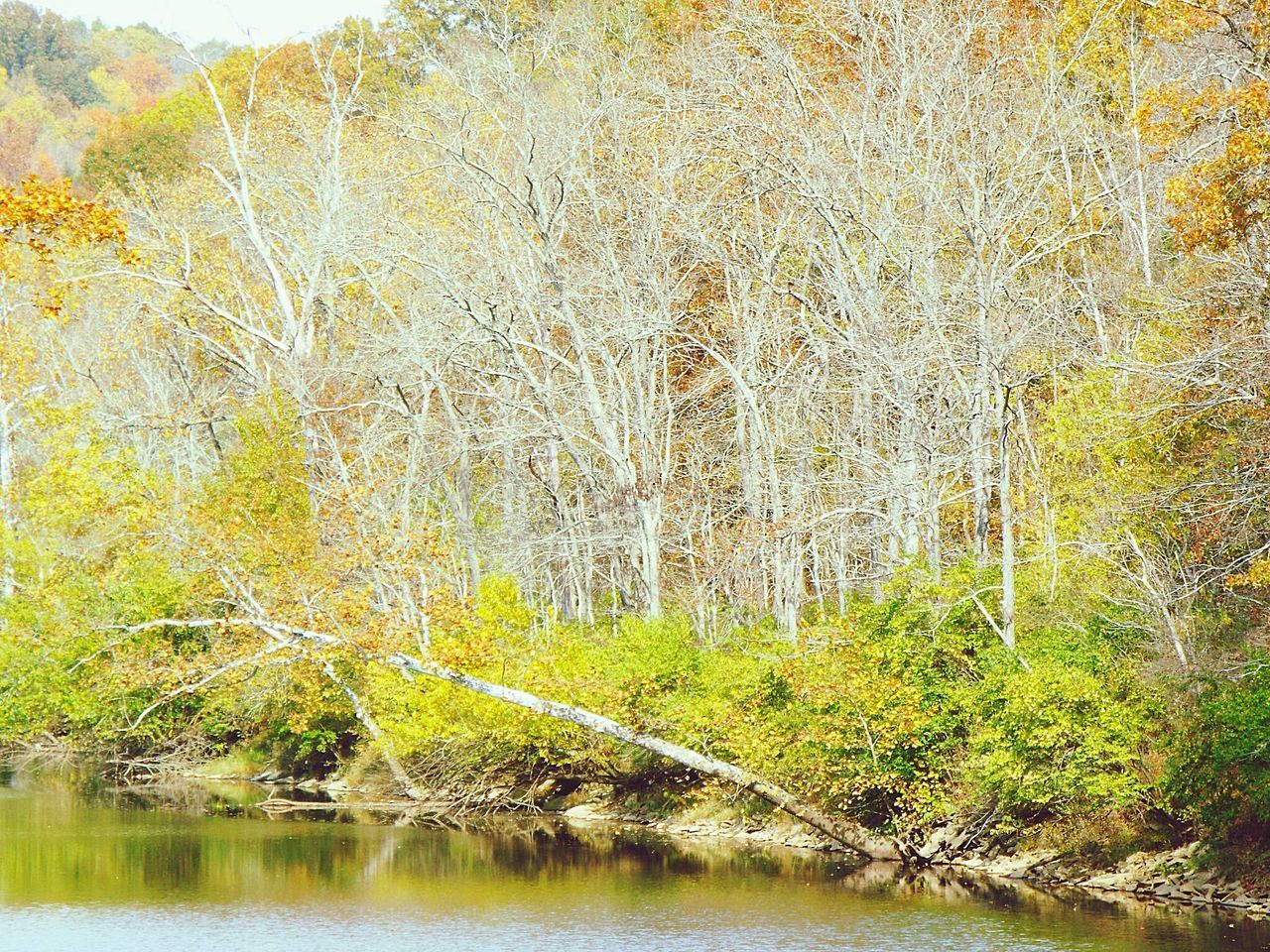 forest, nature, tranquil scene, beauty in nature, tree, river, tranquility, outdoors, water, no people, day, scenics, bare tree, leaf, branch
