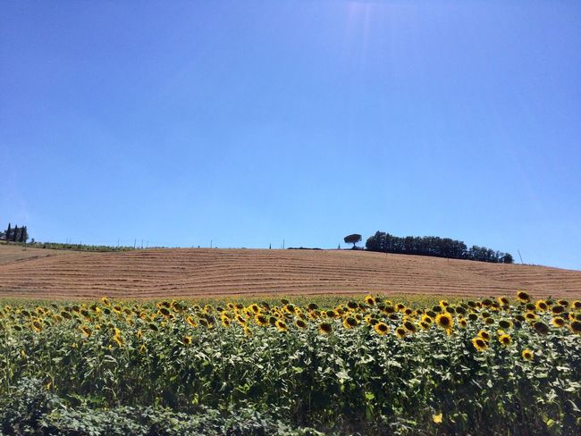 This Week On Eyeem Sunflower Field Clouds And Sky Summer Views Travel