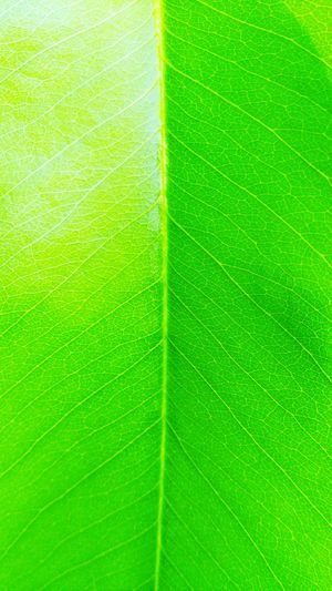 Nature Leaf Green Color Backgrounds Close-up Fragility No People Full Frame Growth Beauty In Nature Outdoors Freshness Animal Themes ใบไม้ ใบไม้สีเขียว