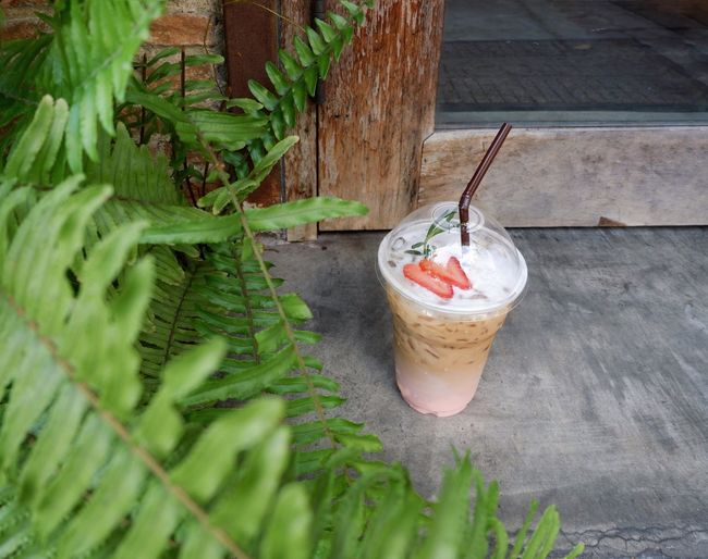 Coffee with strawberry milk in front of the coffee shop surrounding by fern Vacation Fern Sleepy Beverage Wood Vacations Morning Light Leaf Sunshine Cafe Concrete Latte Coffee Strawberry Sweet Food Drinking Glass No People Green Color Freshness Leaf Outdoors Food Day Refreshment Close-up