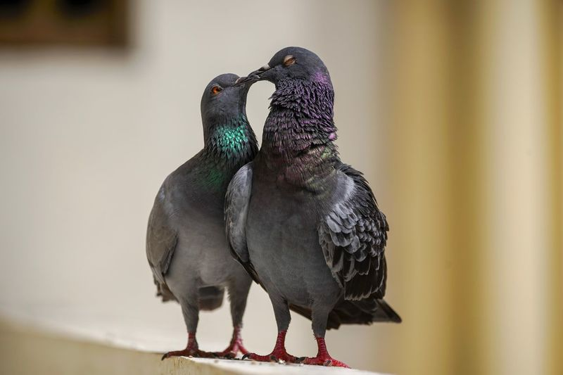 Close-up of pigeons perching on railing