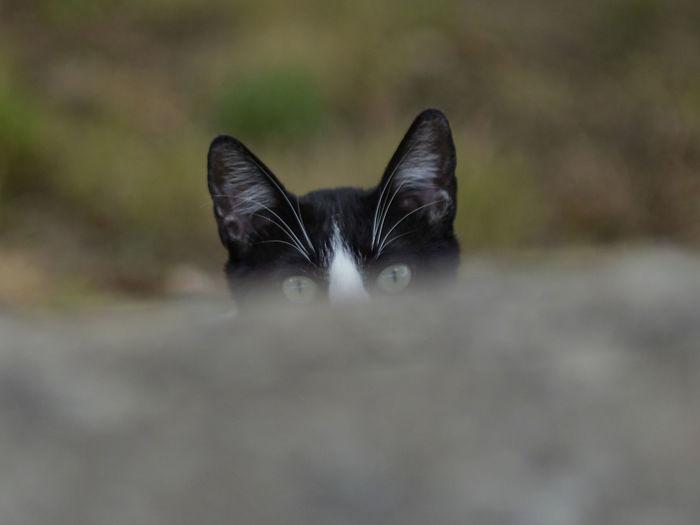 Portrait of black dog outdoors