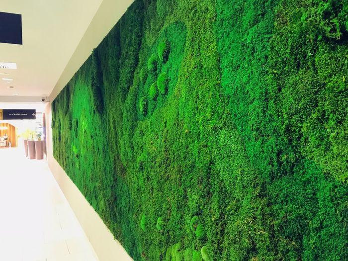 Green Vertical
