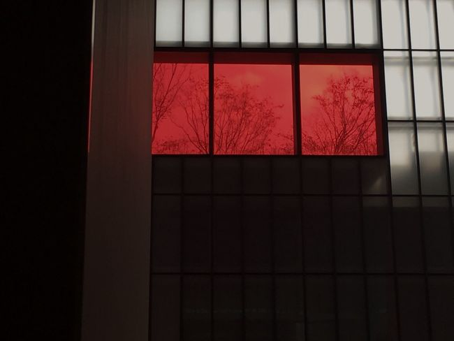 Red Light Red Sky Red Color Red Red Window No People Indoors  Built Structure Architecture Day Bare Tree Close-up Tree EyeEmNewHere