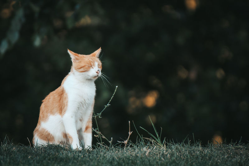 Cat looking away on field